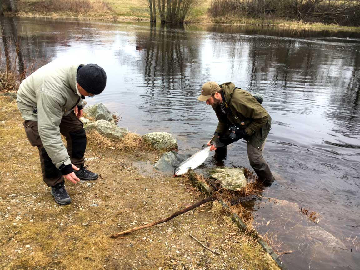 Mattias Holmqvist hjälper till med landningen
