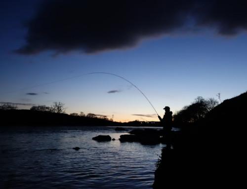River Dee 2017