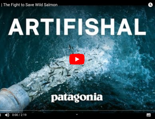 Artifishal | The Fight to Save Wild Salmon