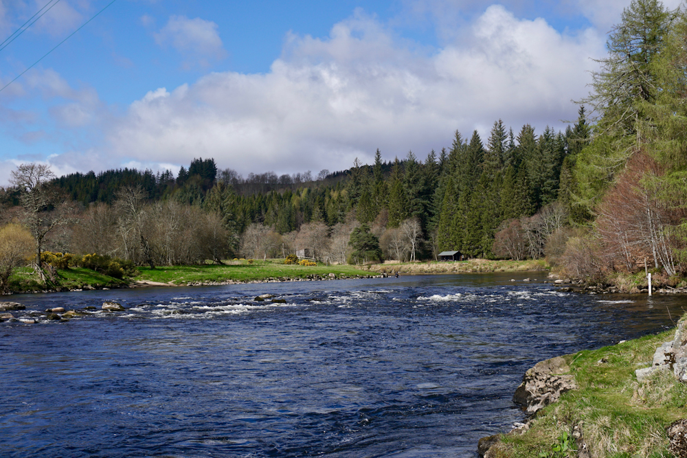 fly fishing spey